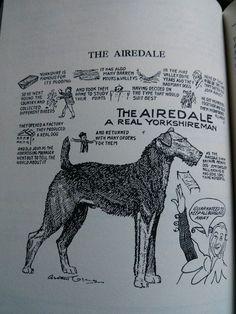 c. 1900's Best Puppies, Best Dogs, Practical Jokes, Airedale Terrier, Border Terrier, Schnauzers, Border Collies, Ink Illustrations, Rainbow Bridge
