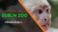 Dublin Zoo animals & all the info You need to know