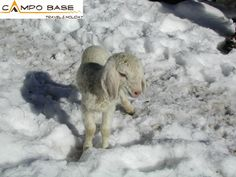 ...agnellino sulla neve!