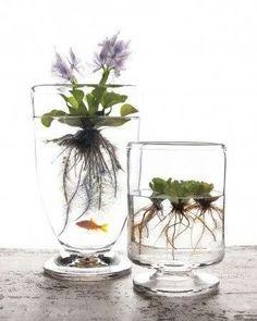 Indoor water garden