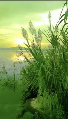 Beautiful Nature Scenes, Beautiful Fantasy Art, Amazing Nature, Nature Gif, Science And Nature, Sound Of Rain, Autumn Scenery, Aesthetic Movies, Closer To Nature