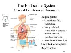 Glands In The Body And Their Functions Glands In Human Body Diagram - Anatomy Chart Body