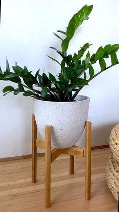 Bamboo Plants, Green Plants, Potted Plants, Indoor Plants, Indoor Outdoor, Pots For Plants, Indoor Bamboo Plant, Large Plant Pots, Tall Plants