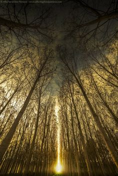 New light in the poplar. Photography from Photography Talk.
