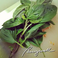 Cooking Pasta with Fresh Basil Like a Pro (Not really!)