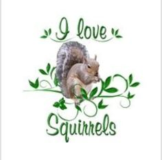 I Love Squirrels Throw Blanket by FunDesigns - CafePress Squirrel Art, Secret Squirrel, Cute Squirrel, Squirrels, Squirrel Pictures, Animal Pictures, Animals And Pets, Cute Animals, Postcard Template