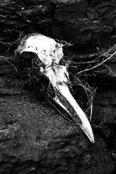color | contrast | texture | pattern | layout | style | photography | Bird Skull