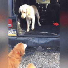 My friend, now I'll help you climb the car