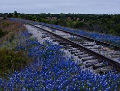 Bluebonnet Railway
