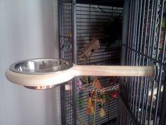 Parrot Perch, Parrot Bird, Bird Perch, Small Bird Cage, Small Birds, Pet Birds, Budgies, Parrots, Parrot Toys