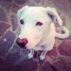 Nina il cane dal naso a cuore