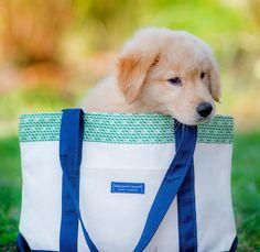 Puppy in Vineyard Vines Tote Bag