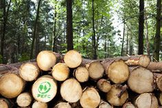 Clima e Co2 - Centurioni 1880 Firewood, Texture, Crafts, Save Energy, Home And Living, Wood, Science, Surface Finish, Crafting