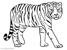 Little tiger coloring page Mollys ABC Book Pinterest Tigers
