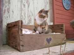 diy pallet idea Home Ideas , DIY Wood Pallet Creative Furniture Idea : Cat Bed . what if I used old dresser drawers? Pallet Crates, Pallet Beds, Old Pallets, Wooden Pallets, Pallet Furniture, Diy Pallet, Pallet Wood, Furniture Ideas, Free Pallets