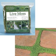 Want that mossy look between your paver stones, but not sure how to get it started? This dormant moss arrives ready to plant; just water it and it will begin to thrive. | Whatever Works