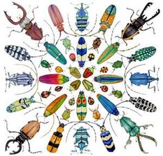 beetles | Insectos