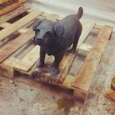Patterdale Terrier.