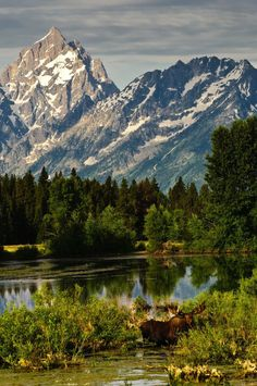 Grand Teton National Park is a National Park in Moose. Plan your road trip to Grand Teton National Park in WY with Roadtrippers. Us National Parks, Grand Teton National Park, The Places Youll Go, Places To Go, Green River, South Dakota, Idaho, Nebraska, Beautiful Landscapes