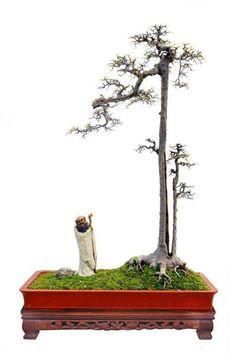Bonsai 1558