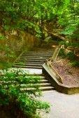 Paisaje con escaleras pasando por bosque verde