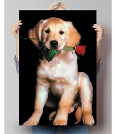 Poster Golden Retriever Power Trip, Pitbull, Dogs, Poster, Animals, Cats, Doggies, Funny Animal Pics, Puppys
