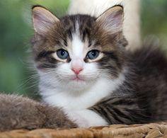 Binck [redux]  kitten