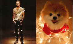 Ahhh the age-old question: Is Ryan Gosling cuter than a puppy? #besttumblrever