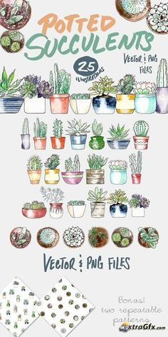Potted Succulents Illustration Pack - 718043 - Potted Succulents Illustration Pack