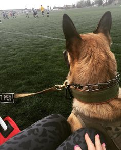 1,389 Followers, 423 Following, 290 Posts - See Instagram photos and videos from Tanya (@bettertogether_k9)