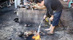 Nichts für europäische Mägen: Hier flambiert ein Händler auf dem Delikatessen-Markt von Langowan in Indonesien einen Hund
