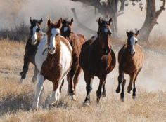 The plans to round up and remove wild horses near Arizona