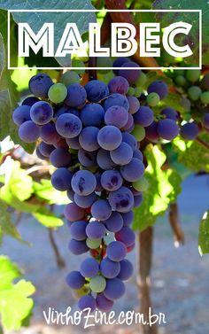 Saibda tudo sobre Vinhos Malbec!