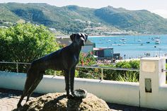 Cape Town 1 | CABS Car Hire | www.cabs.co.za Car Rental, Cape Town, South Africa, Dogs, Animals, Animales, Animaux, Pet Dogs, Doggies
