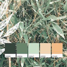 """Branding & Grafik ☘︎ Sabine on Instagram: """"🌿Color Palette """"Soft Bamboo"""" ⠀⠀ Im Urlaub habe ich fleißig Farben gesammelt. In unserem Haus in Südfrankreich hatten wir eine ganz tollen…"""" Bedroom Colour Palette, Nature Color Palette, Green Colour Palette, Bedroom Color Schemes, Colour Schemes, Color Combos, Orange Color Palettes, Pantone Colour Palettes, Pantone Color"""