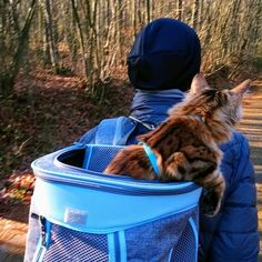 Elsa: Hurry up Mum I can see the weekend up there in the front!   #adventurecat #backpackersintheworld #allcatphotos300 #bengalcatworld #bestmeows #cutecatclub #catsarecute #catstagramcat #campervanlife #catfeaturesdaily #catexplorer #hikingwithcats #hiking #explorercat #exploretheworld #lovemybengal #meowdel_feature #magnificent_meowdels #meowed #nc_cuties #trendscat #travelcat #topcatphotos #weekendadventures #waitingfortheweekend #carryme Camper Van Life, Adventure Cat, Bengal, Photo S, I Can, Elsa, Hiking, Kitty, Cats