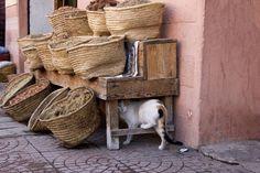 【画像】モロッコは猫の国と聞き及んで