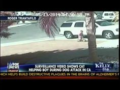 Family Cat Saves Child From Dog Attack - The Kelly File
