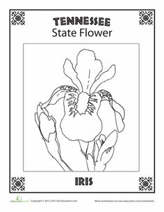 Worksheets: Tennessee State Flower