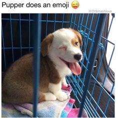 40 Funny Pictures For Today (#88)
