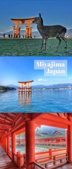 Miyajima, Japan. Hiroshima Things To Do and Travel Itinerary and Guide. Experience the beauty of Miyajima, Japan.