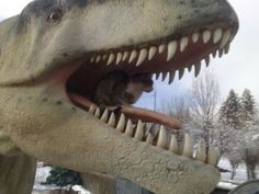 Hey, cat, what are you doing in T-Rex jaws? #Funny #Cats #LOLcats