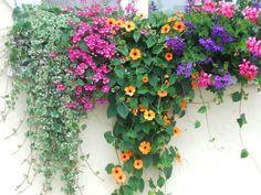 der bunte Blumenkasten - Mein Garten
