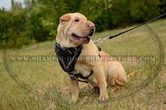 Reliable #Dog #Harness for #Training Your #Shar #Pei