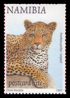 Namibia 1997 Animal definitive Leopard [Panthera pardus]
