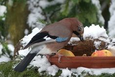 Attract Birds In Winter And Bring Your Garden To Life Ugh. It is winter. Gray, dull and down right depressing at times. The lifeless landscape causes us to Food For Chickens, Parakeet Food, Bird Identification, Bird House Kits, Wild Bird Food, How To Attract Birds, Conure, All Birds, Winter Landscape