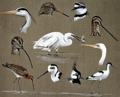Bird Art, Cool Art, Birds, Animals, Nice, Small Birds, Animal Paintings, Canvases, Water Colors
