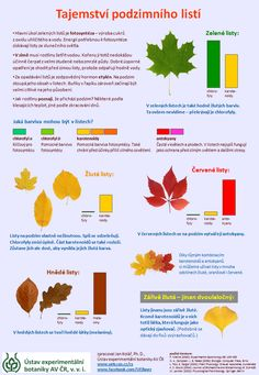 Tajemství podzimního listí - infografika o změnách barvy listů na podzim Autumn Activities For Kids, Science For Kids, Preschool Activities, Crafts For Kids, Montessori, School Clubs, Autumn Crafts, Fall Is Here, Elementary Science
