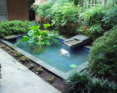 back yard pond fish plants water outdoor area contemporary