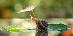 Best photos of snails